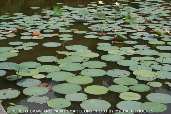 How to Draw a Lily Pad Step 3