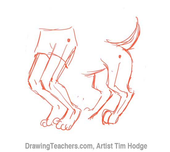 How to Draw a Cartoon dog 6