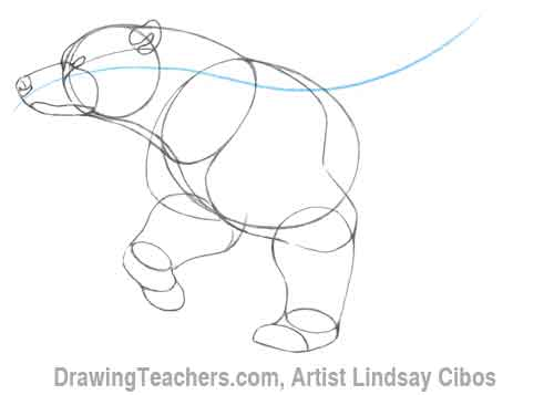 Cartoon Polar Bear - How to Draw a Polar Bear Step by Step