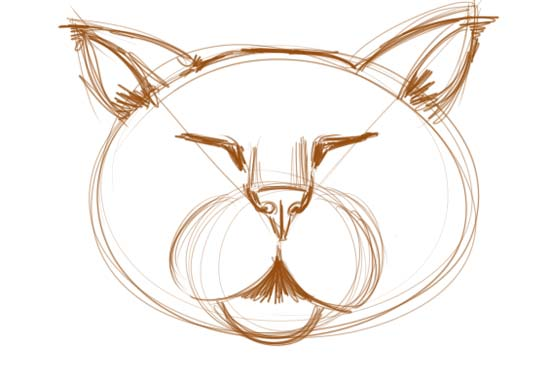 How to Draw a Cat Face Step 4