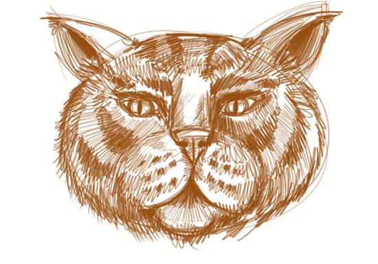 How to Draw a Cat Face Step 9