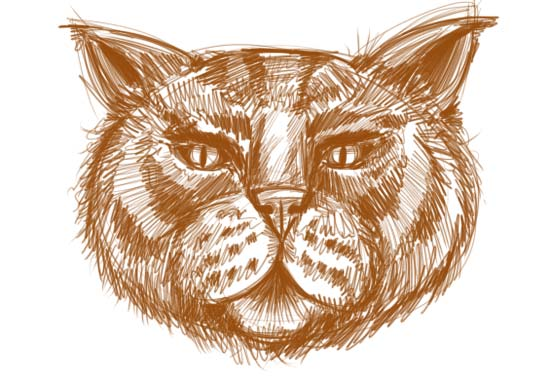 How to Draw a Cat Face Step 10