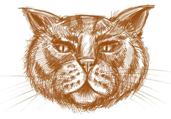 how to draw animals faces. How to Draw a Cat Face