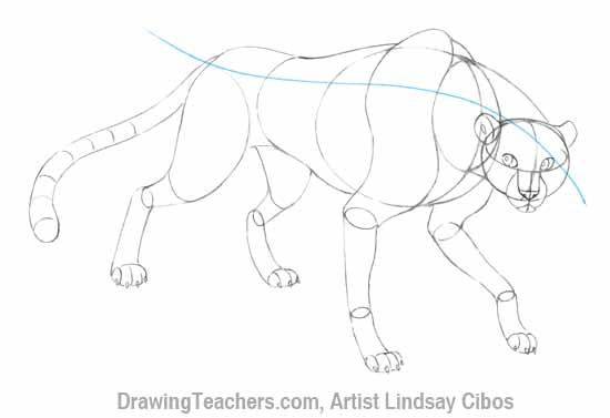 How to Draw a Cheetah Step 6