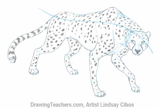 how to draw cheetah print step by step
