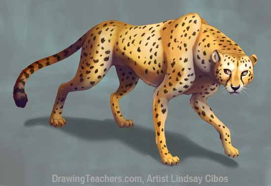 How to Draw a Cheetah Step 8