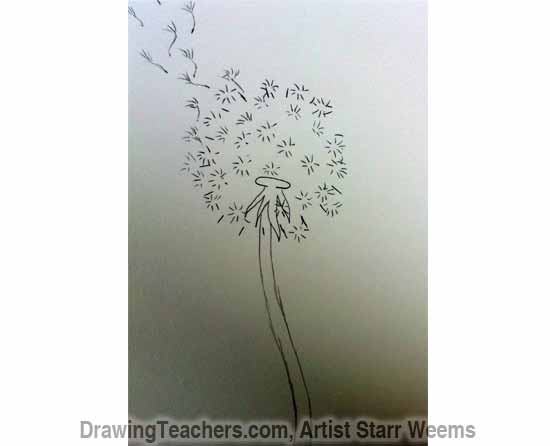 How to Draw a Dandelion 4
