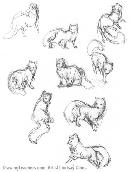 How to draw a fox - photo#15