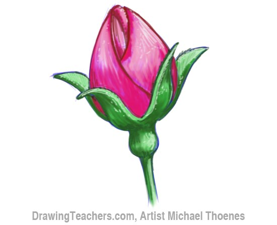 How to Draw a Rosebud 10