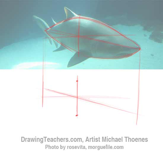 How to Draw a Shark Step 2