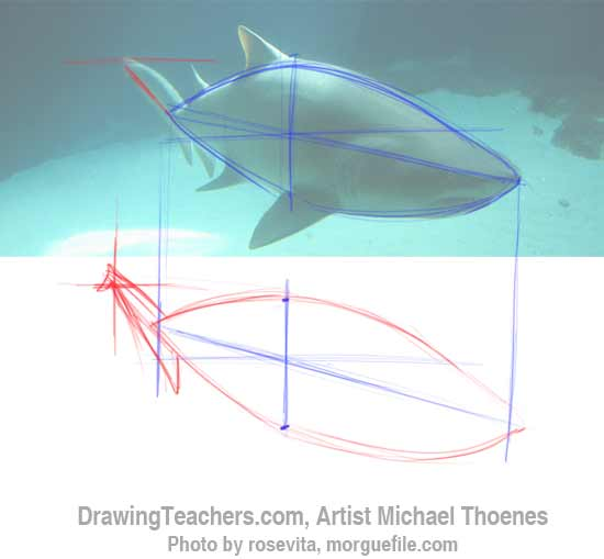 How to Draw a Shark Step 3
