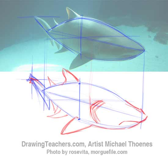 How to Draw a Shark Step 4