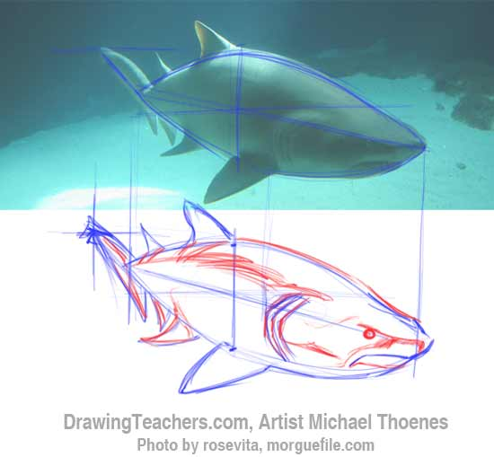 How to Draw a Shark Step 5