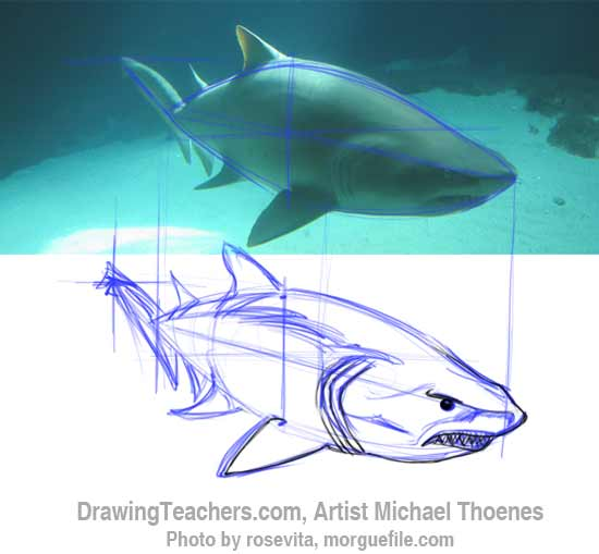 How to Draw a Shark Step 7