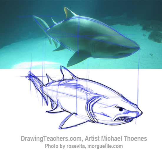How to Draw a Shark Step 8