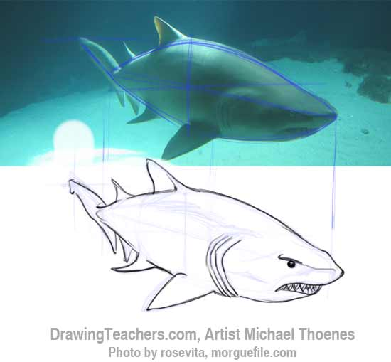 How to Draw a Shark Step 9