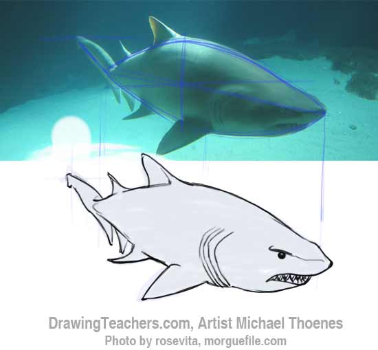 How to Draw a Shark Step 10