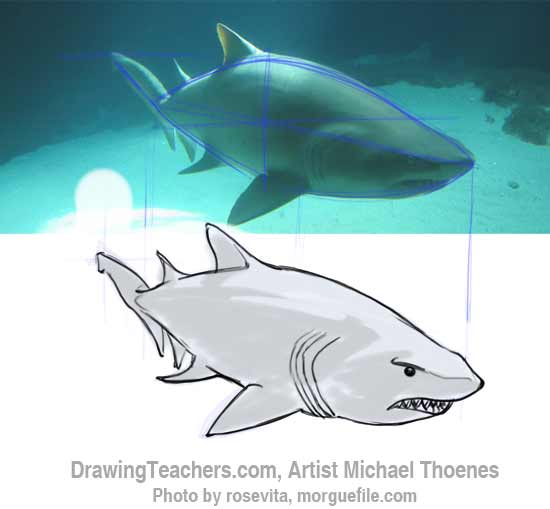 How to Draw a Shark Step 11