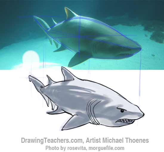 How to Draw a Shark Step 12