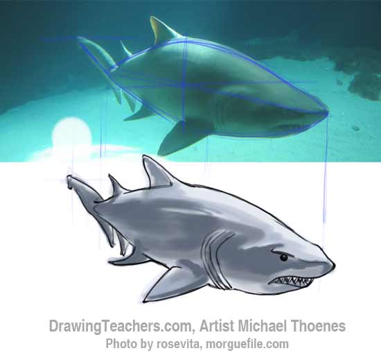 How to Draw a Shark Step 14