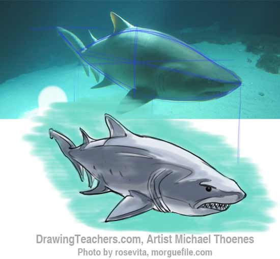 How to Draw a Shark Step 16