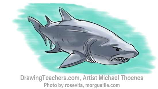 How to Draw a Shark Step 177