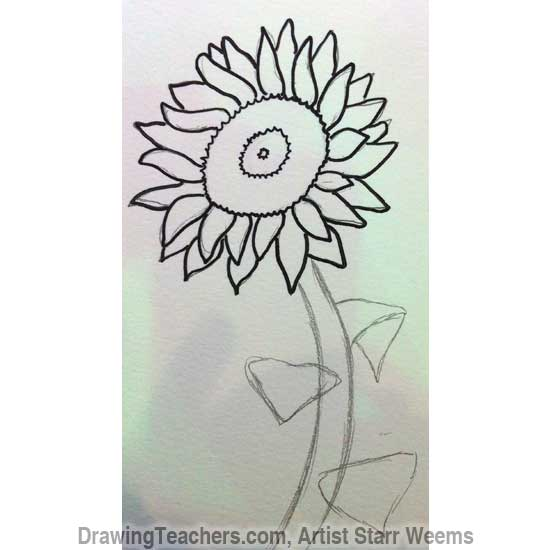 How to Draw a Sunflower 5