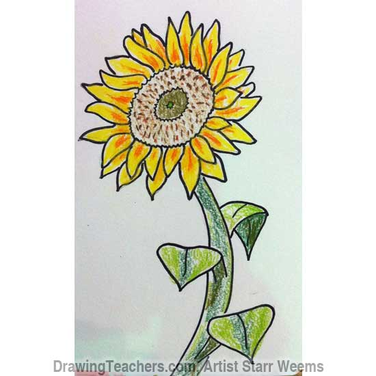 How to Draw a Sunflower 6