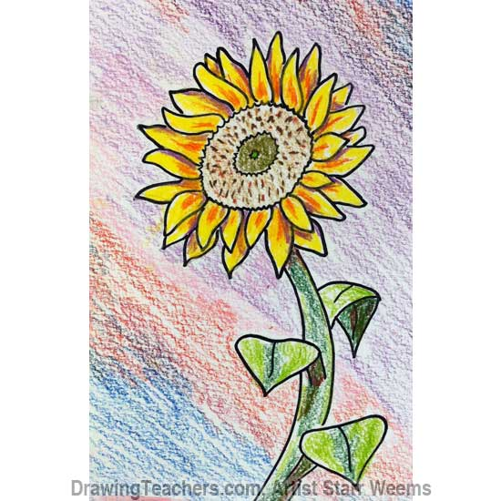 How to Draw a Sunflower 7