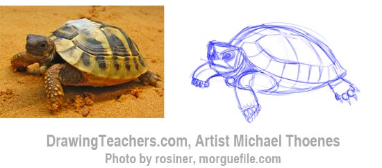 How to Draw a Turtle 4