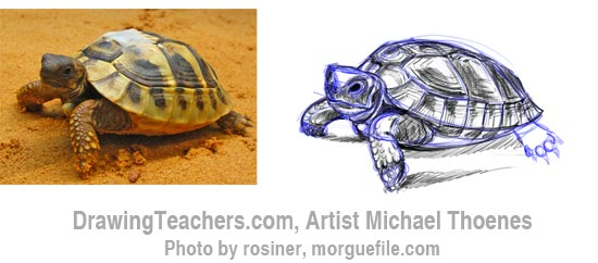 How to Draw a Turtle 6