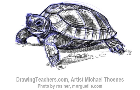 How to Draw a Turtle 8
