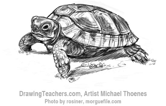 How to Draw a Turtle 9