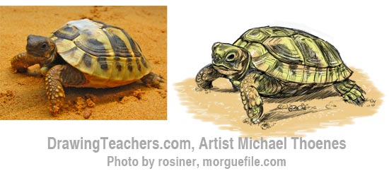 How to Draw a Turtle 11