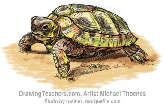 How to Draw a Turtle 13