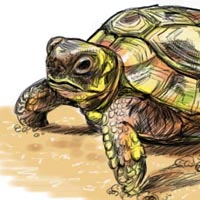 How to Draw a Turtle 16