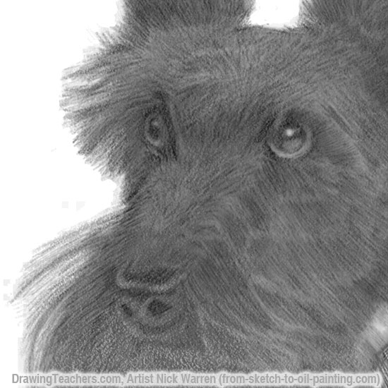 How to draw Dogs Closeup