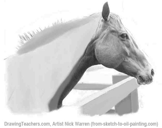 How to Draw horses 12