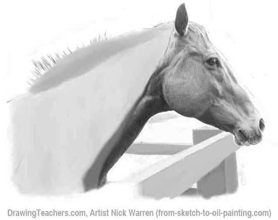 How to Draw Horses 12-13