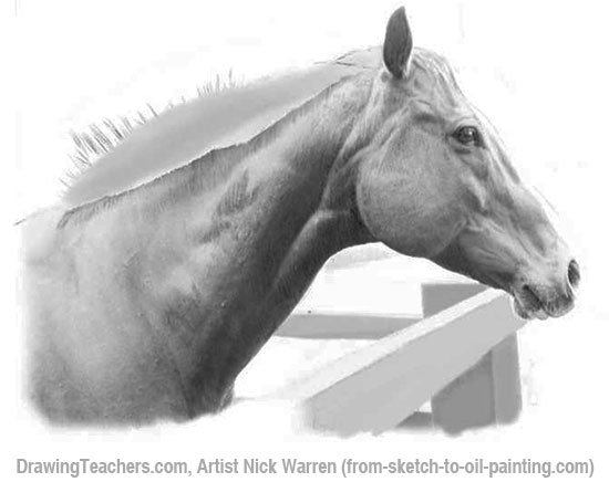 How to Draw horses 14