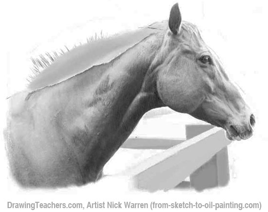 How to Draw Horses 14-15