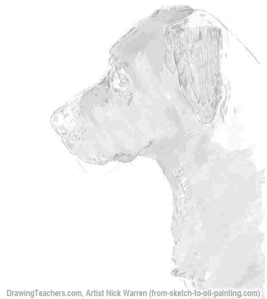 Learn How to Draw Dogs Head