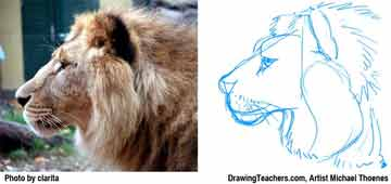 Lion Drawing Step 4 - How to Draw a Lion