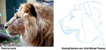 Lion Drawing Step 5 - How to Draw a Lion
