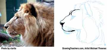 Lion Drawing Step 6 - How to Draw a Lion