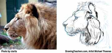 Lion Drawing Step 9 - How to Draw a Lion