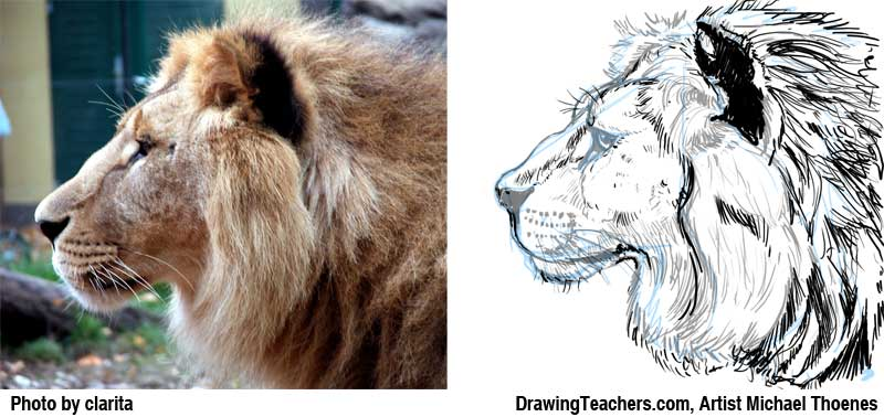 Lion Drawing - How to Draw a Lion Step by Step