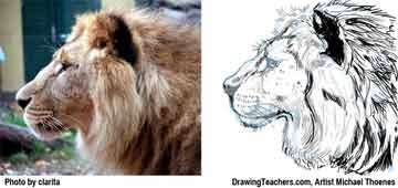 Lion Drawing Step 10 - How to Draw a Lion