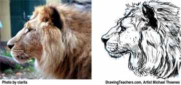 Lion Drawing Step 11 - How to Draw a Lion