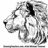 Lion Drawing - How to Draw a Lion